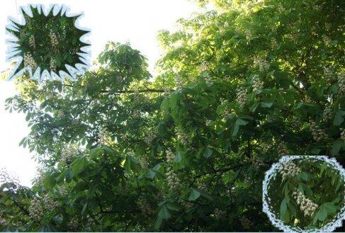 http://www.proza.ru/pics/2011/06/16/12.jpg?4715
